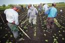 Cadeau inespéré pour 13 travailleurs guatémaltèques