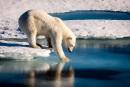 Un nouveau plan américain pour protéger les ours polaires