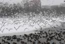 Froid intense et tempête de neige en Europe