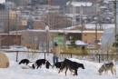 Le parc à chiens de Pointe-aux-Lièvreslà pour rester