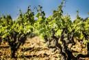 Valoriser le terroir de la Rioja