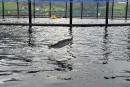 L'aquaculture, une menace à la sécurité alimentaire?
