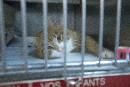 20 000 chatons quatre ans plus tard sans stérilisation