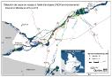 Carpe asiatique: une menace pour le lac Saint-Pierre