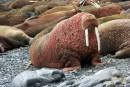 Vaste opération d'Interpol contre le trafic d'espèces sauvages dans le monde