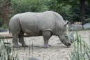 Rhinocéros abattu en France: des mesures en place au Zoo de Granby
