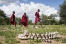 Trois enfants passent devant le cadavre d'un des 422 bovins... | 17 mars 2017