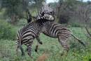 Au coeur du parc Kruger