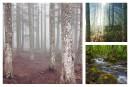 Le Projet Clic: au coeur de la forêt