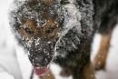 Histoires de chiens: aider les policiers