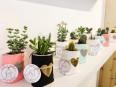 Les cactus et plantes grasses en pots de Marie-C Vincent... | 14 avril 2017