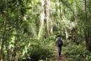 Ce qu'il reste de l'Amazonie