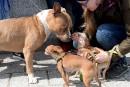 Dimanche, ils étaient plus d'une centaine de propriétaires de chiens de toutes races réunis devant l'Assemblée nationale, pour manifester contre le projet de loi 128.