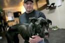 La SPA-Estrie enquête pour cruauté envers un chien