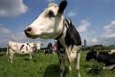 Trump cible les produits laitiers