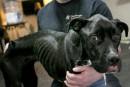 Cruauté envers un chien: nouvelles accusations contre le propriétaire