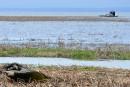 Perchaude: le moratoire prolongé de 5 ans au lac Saint-Pierre