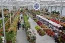 Le centre horticole Hamel repousse