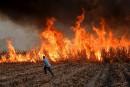 Des travailleurs mexicains mettent le feu à une plantation de... | 15 mai 2017