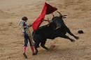 L'Espagnol Roman Collado tient tête à son adversaire bovin pendant... | 16 mai 2017