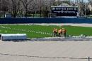 Le terrain du Stade Canac se couvre de vert