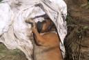 Un chien maltraité et enterré vivant
