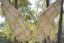 Des ailes pourvos égoportraits