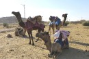 <em>Le désert de Jaisalmer</em>