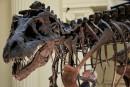 Le tyrannosaure n'était pas un dinosaure à plumes