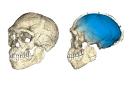 <em>Homo sapiens</em> :«Un coup de vieux de 100 000 ans»