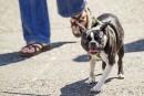 La promenade profite tant aux chiens qu'à leurs maîtres