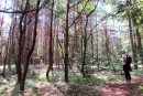 <em>Quand la forêt chante</em>