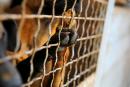 Cruauté animale à Québec:«un des pires cas jamais vus»