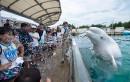 Un béluga asperge les spectateurs lors d'une performance à l'aquarium... | 17 juillet 2017