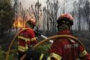 Le Portugal en guerre contre les eucalyptus