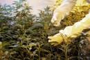 Cannabis: les provinces disent manquer d'informations