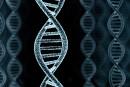 ADN numérique
