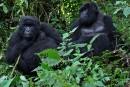 Le Rwanda mise sur le tourisme haut de gamme