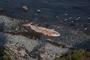 Deux autres baleines noires retrouvées mortes à Terre-Neuve