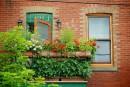 Un été sans tracas: le retour des plantes au salon