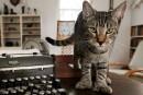 <em>Irma</em> : les 54 chats à six doigts d'Hemingway sains et saufs