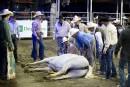 Un cheval sauvage est demeuré étendu au sol quelques minutes... | 13 septembre 2017
