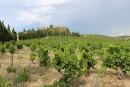 Vins de France: le réveil du Roussillon