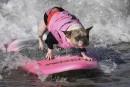 La Californie, paradis des... chiens surfeurs