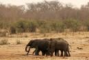 Trophées d'éléphants: Trump «inapte à gouverner» pour Brigitte Bardot