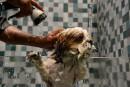 En Inde, un hôtel de luxe pour chiens pouponnés