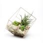 TERRARIUM CUBETrès en vogue actuellement, le terrarium en verre constitue... | 6 décembre 2017