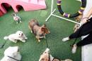 Pas de cirque de chiens pour l'année du Chien