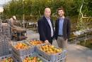 De cultivateur de tomates... à producteur de <em>pot</em>