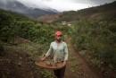 Les plantations de café du Brésil, nouvelle niche touristique